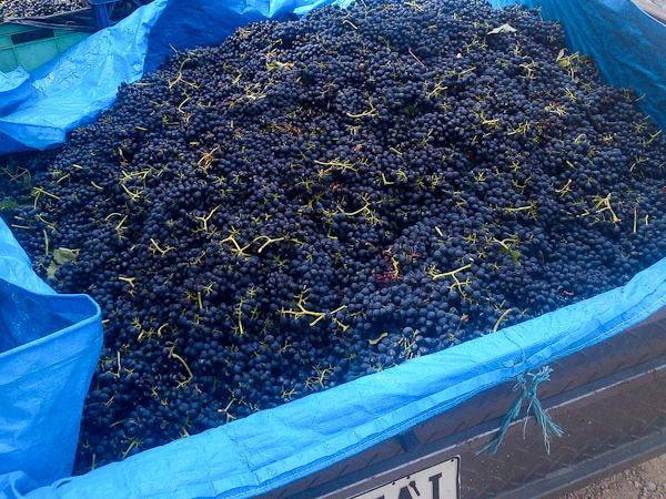 wine 2013 (1 of 1)-7