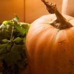pumpkin soup (1 of 1)