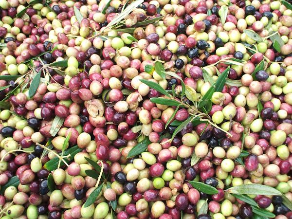 olives (1 of 1)-3