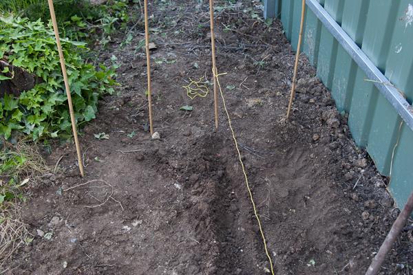 planting corn (1 of 1)